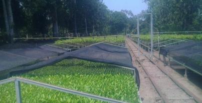 Producci n de plantas en viveros del gobierno del estado for Produccion de viveros