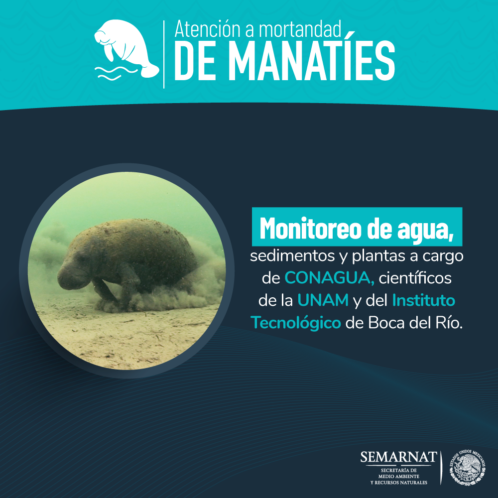 Atencion-de-mortandad-de-manaties3.png