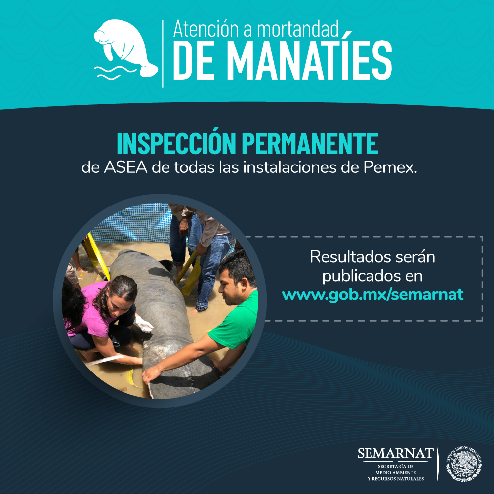 Atencion-de-mortandad-de-manaties5.png